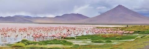 De flamingo's van het panorama royalty-vrije stock afbeeldingen