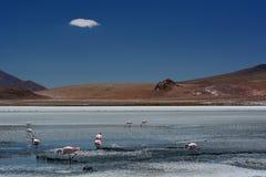 De flamingo's van James in Laguna Hedionda PotosÃafdeling bolivië Royalty-vrije Stock Afbeelding