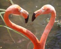De flamingo van het hart, voor Valentijnskaart Royalty-vrije Stock Fotografie