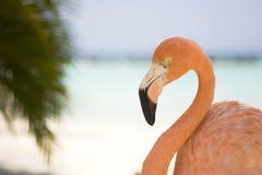 De Flamingo van het strand Stock Foto's