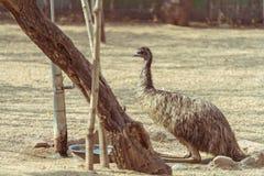 De flank van een struisvogel stock afbeeldingen