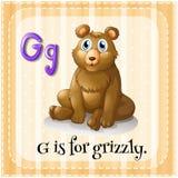 De Flashcardbrief G is voor grizzly Royalty-vrije Stock Fotografie