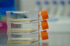 De fles van de celcultuur voor monolayers cellen in het cultuurmiddel stock foto's