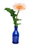 De fles van de kleur wordt bloempot voor milieu Stock Foto