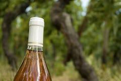 De fles van de wijn, in een wijngaard. Stock Afbeeldingen