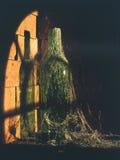 De Fles van de wijn verlaten in kelder Royalty-vrije Stock Foto