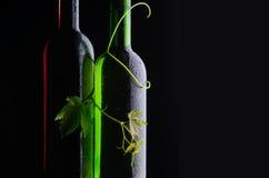 De flessen en de wijnstok van de wijn royalty-vrije stock afbeelding