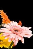 De fleurs toujours durée Photos stock