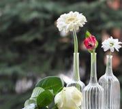 De fleurs toujours durée photo libre de droits