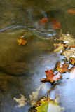 De Flikkering van het Blad van de herfst Stock Afbeelding