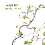De flora van de lente stock afbeeldingen