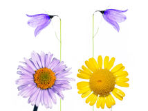 De flora van de zomer royalty-vrije stock fotografie