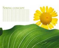 De flora van de zomer royalty-vrije stock afbeeldingen