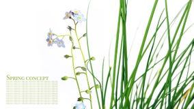 De flora van de zomer stock foto's
