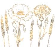 De floristische bloemen van het grafiek gouden overzicht, papaver, korenbloem, tarwe Stock Fotografie