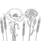 De floristische bloemen van het grafiekoverzicht, papaver, korenbloem, tarwe Royalty-vrije Stock Afbeelding