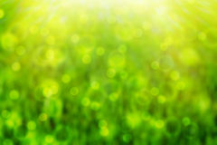 De-focused green background Stock Photography
