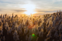 De-focused nature background Stock Photography