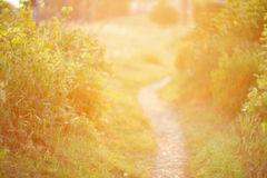 De focused path on sunset Royalty Free Stock Photos