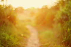 De focused path on sunset Stock Photo