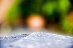 De-fokuserad bakgrund av trädgårds- bokeh Arkivbild