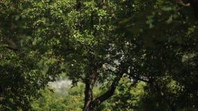 De fontein in het park in de zomer kan door de bomen worden gezien stock videobeelden