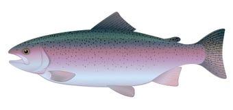 De Forel van de regenboog vector illustratie