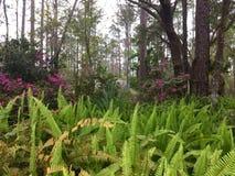 De Forestryal bloemrijke hemelse lente royalty-vrije stock foto