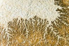 De fossielen van de installatie in steen stock foto's