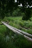 De foto is oude en gevaarlijke kruising door een kleine moerassige bosrivier in het Noorden van Europa Stock Foto's
