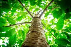 De foto van de boom wordt genomen uit de bodem stock fotografie