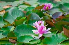 De Foto van de bloem Royalty-vrije Stock Afbeeldingen