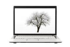 De foto van de boom op laptop vertoning Stock Foto