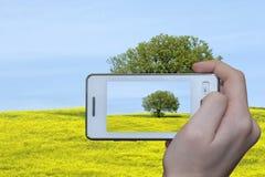 De foto van de boom op smartphone Stock Afbeeldingen