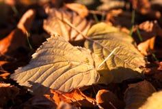 De foto van de close-up van kleurrijke gevallen de herfstbladeren royalty-vrije stock afbeeldingen