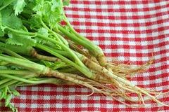 De foto van de close-up van verse korianderwortels stock fotografie