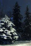 De foto van de de winternacht Stock Afbeeldingen