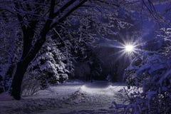 De foto van de de winternacht Stock Foto