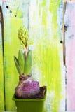 De foto van de hyacintbloem Royalty-vrije Stock Afbeeldingen