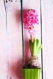 De foto van de hyacintbloem Royalty-vrije Stock Foto's