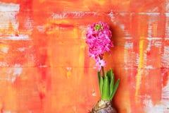 De foto van de hyacintbloem Royalty-vrije Stock Foto