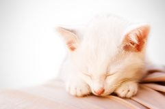 De foto van de kat - Engelachtige slaap 2 Royalty-vrije Stock Foto's