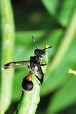 De foto van de wesp stock afbeelding