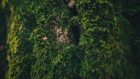 De foto van droge zaden op een mos behandelde een boomboomstam Royalty-vrije Stock Fotografie
