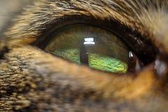 De foto van het het oogclose-up van de kat één oogclose-up Stock Foto