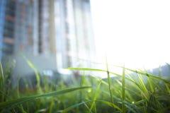 De foto van het nieuwe gebouw op de achtergrond is vaag, in de voorgrond is er een mooi grassprietje met dalingen van mornin royalty-vrije stock afbeeldingen