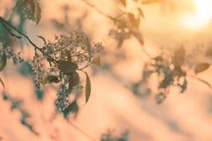 De foto van mooie kersenbloesem, vat natuurlijke achtergrond, fijne kunst, het seizoen van de de lentetijd samen, appel die in zo stock foto's