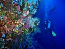 De foto van onderwater wild koraal op de voorgrond en twee scuba-duikers zijn op de blauwe schone waterachtergrond stock foto