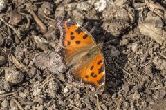 De foto van de vlinderlente royalty-vrije stock foto's