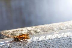 De foto van de vlinderlente royalty-vrije stock fotografie